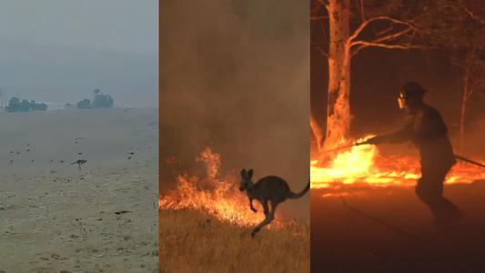 Australia comienza el año 2020 con voraces incendios | Video