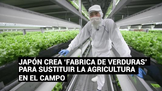 """Japón crea """"fábricas de verduras"""" para sustituir la agricultura en el campo"""