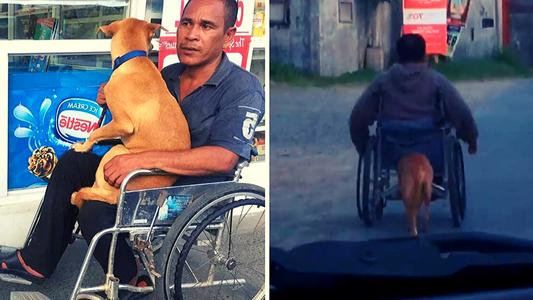 Perrito ayuda a empujar silla de ruedas de hombre y se hace viral