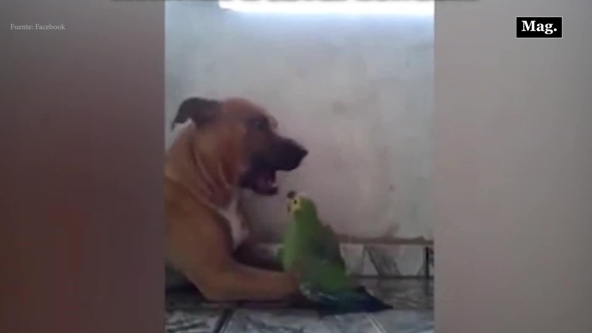 Mujer retorna a su casa y encuentra a su perro y loro en curiosa situación