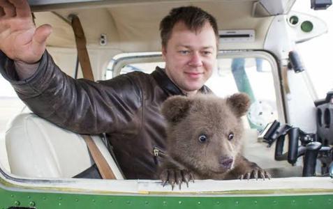 """Conoce a Mansur, el oso """"aéreo"""" que fue adoptado por pilotos en Rusia"""