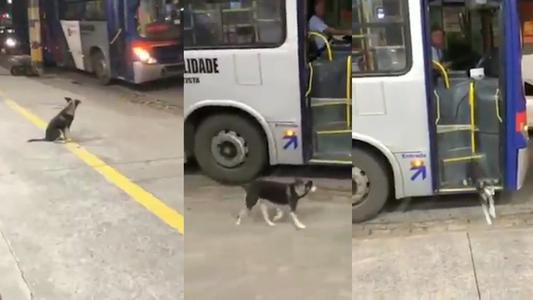 Perro espera todos los días a chofer de autobús que le regala comida
