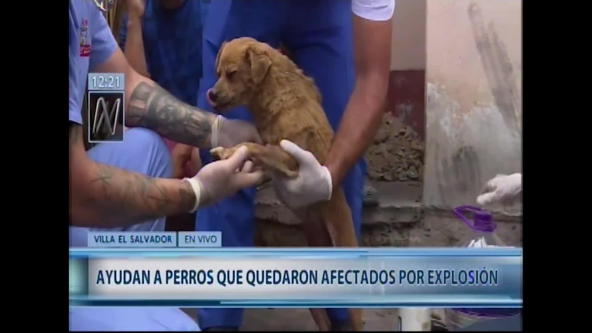 Incendio en VES: animales afectados por explosión reciben ayuda