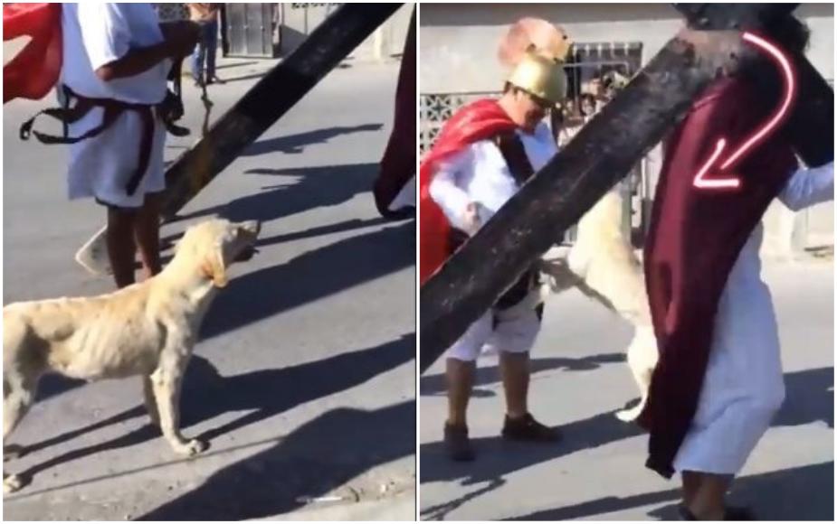 Perro defiende a 'Jesús' que era azotado en escenificación del Vía Crucis