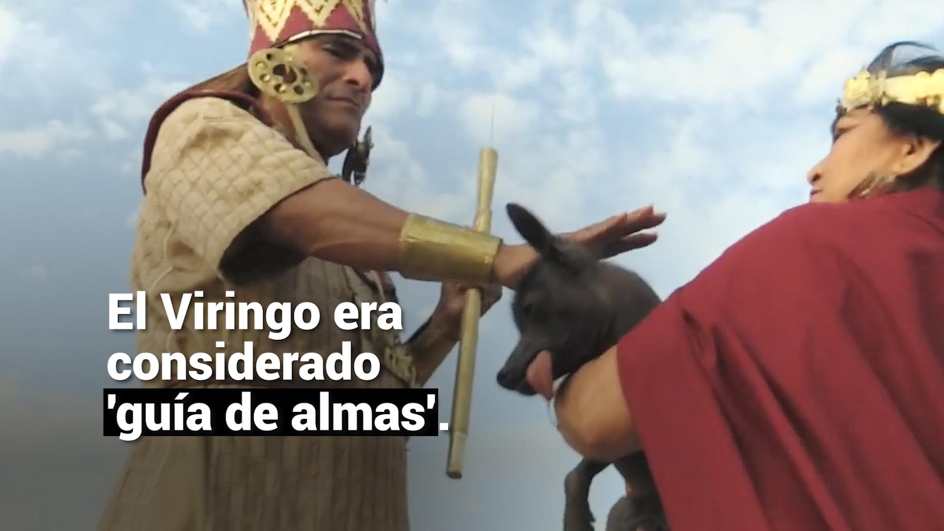 Perro sin pelo: la historia de la milenaria mascota de los peruanos