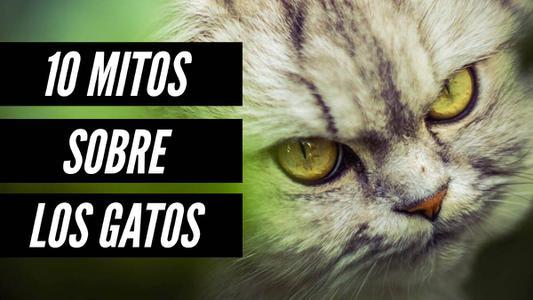 10 mitos de los gatos que ya no deberías creer