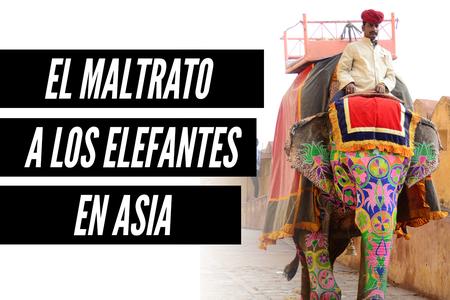 La dura y triste vida de los elefantes maltratados en Asia