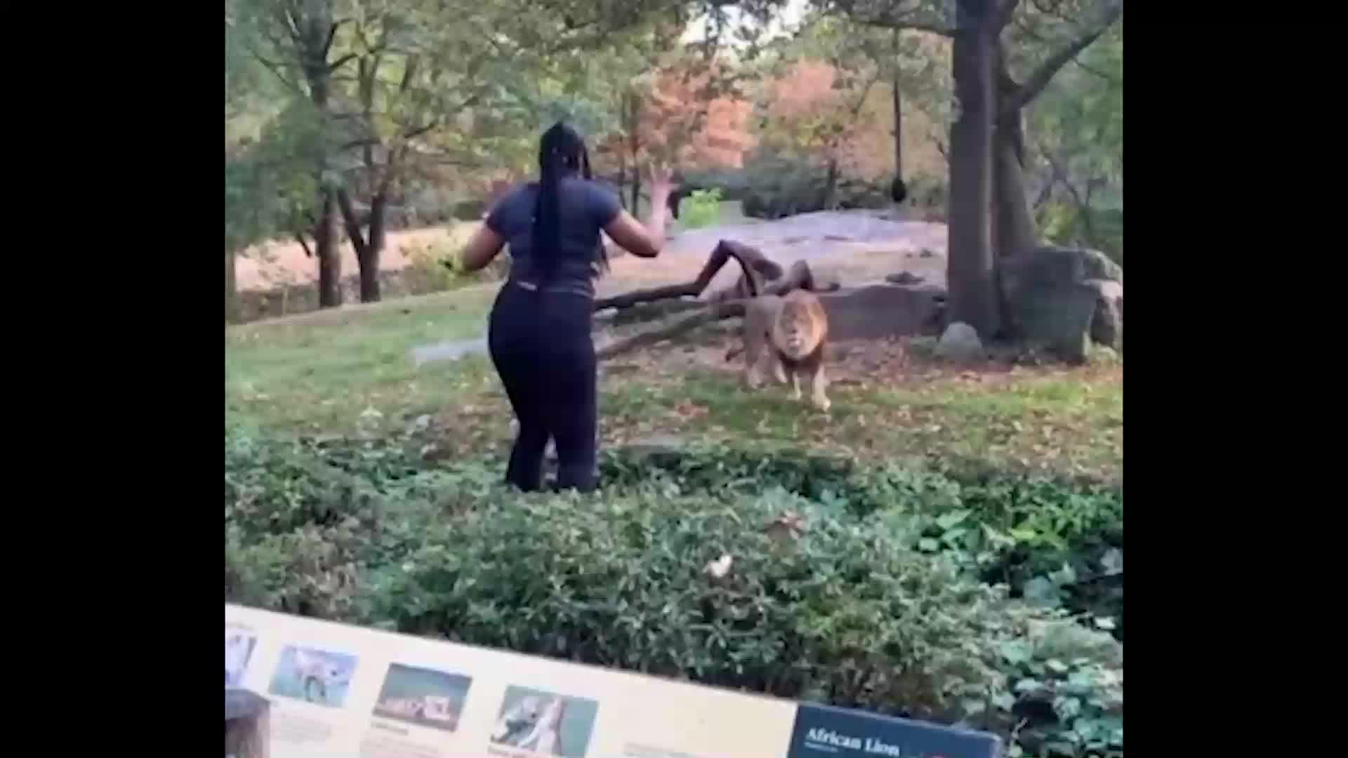 Mujer ingresa a jaula de leones y baila frente a ellos