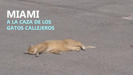 Miami: pagan por cazar gatos callejeros