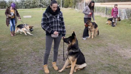 Perros protectores: Conoce el proyecto que entrena a canes para combatir la violencia machista