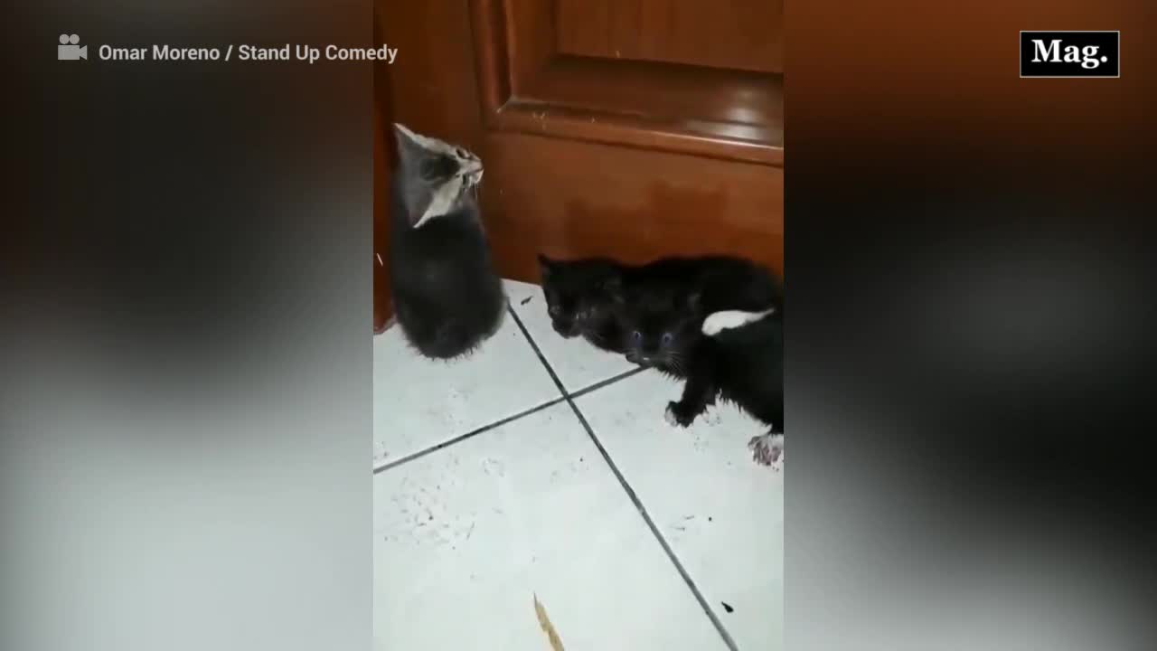 Comediante rescata gatitos bajo la lluvia y se vuelve viral
