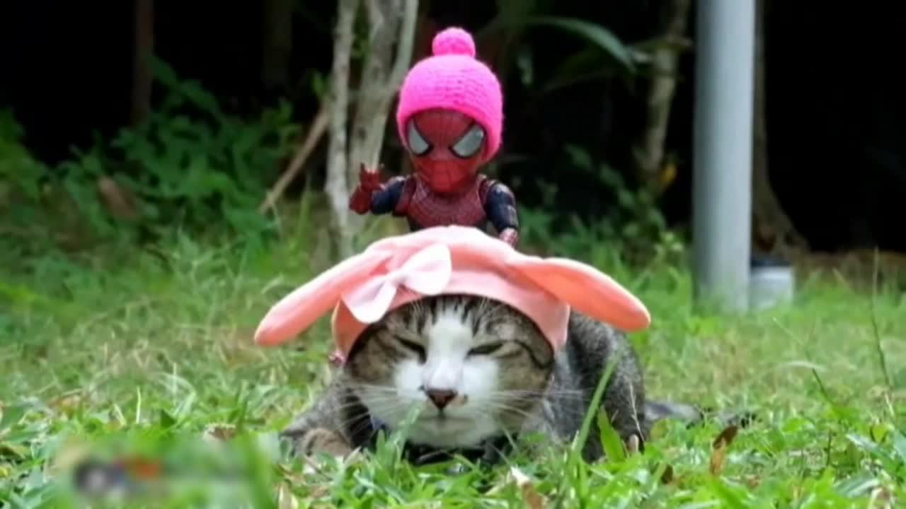 Combinar en una foto gatos con Spiderman, el éxito de un artista tailandés