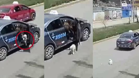 Mujer arroja a perro desde un taxi, lo abandona e intenta atropellarlo | VIDEO