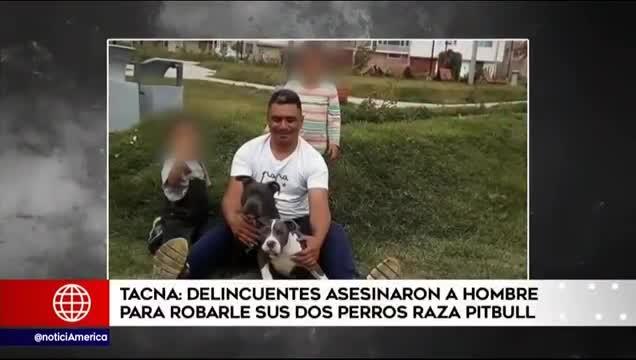 Tacna: asesinan a hombre para robarle sus perros pitbull
