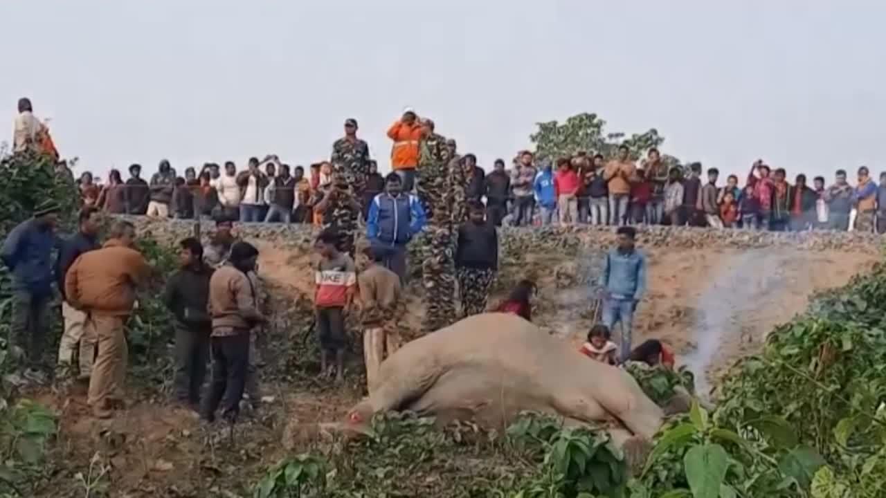 Dos elefantes mueren atropellados por un tren en India