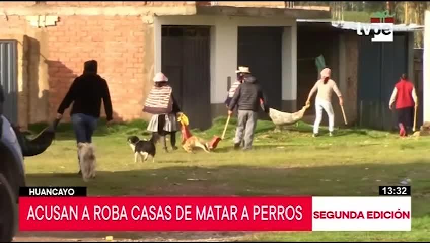 Huancayo: encuentran nueve perros muertos