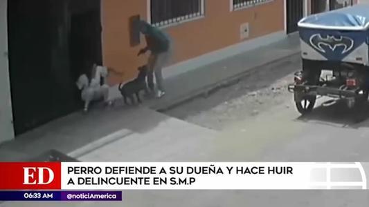 SMP: perro se enfrenta a delincuente y salva a su dueña