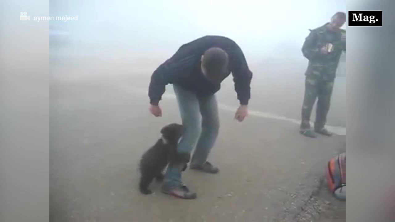 Osito bebé se negó a separarse del hombre que lo salvó de un incendio forestal