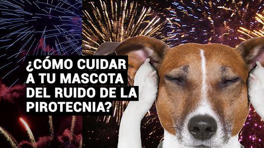 Cinco tips para proteger a tu mascota del ruido de los pirotécnicos  en Navidad y Año Nuevo